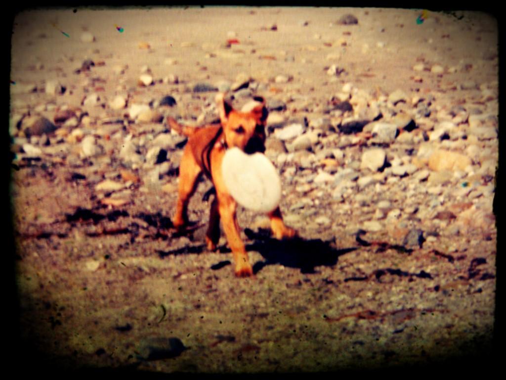 A remarkable dog named Nandi